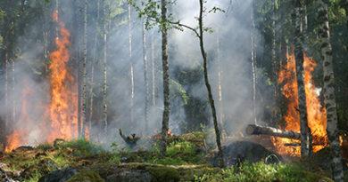 Sverige behöver få på arslet
